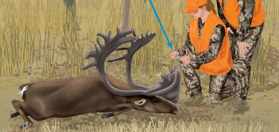 What Type of Information Would You Find in a Hunting Regulations Publication?
