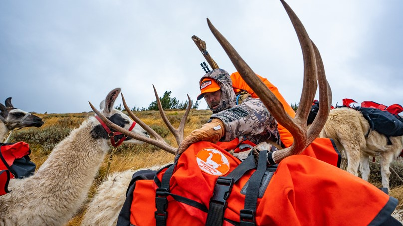 Deer Hunting Allows Hunters to Travel