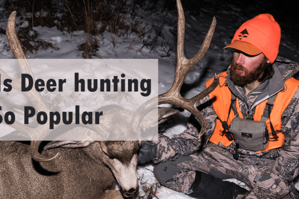 The Reasons Why Is Deer hunting So Popular